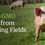 Non-GMO pork from Grazing Fields